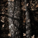 Shady Oak